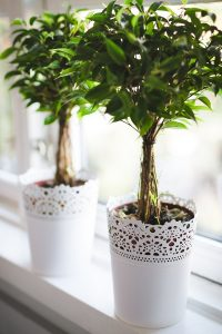 Plant in white container