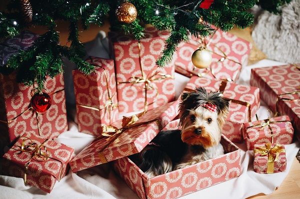 Cute Puppy as a Christmas Present Surprise